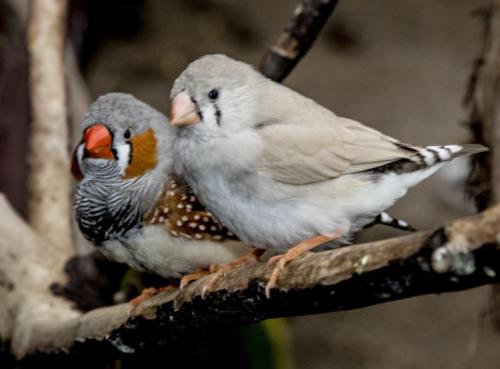 Birds in the Bloedel Conservatory, Vancouver, Nov. 2016.