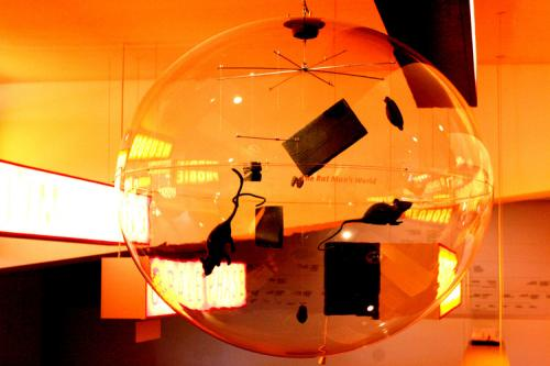 051+-+Freud+Exhibit,+May,+2006+