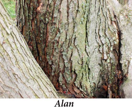 Alan+Blewett,+6