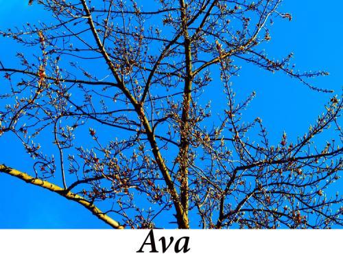Ava,+9