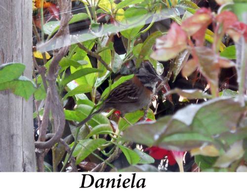 Daniela,+11