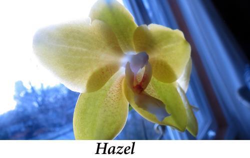 Hazel,+11