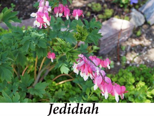 Jedidiah+-+