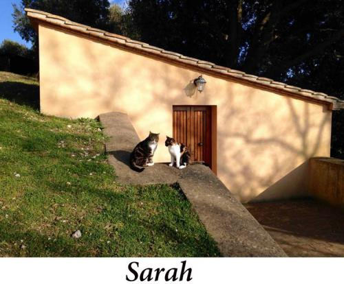 Sarah+McGeer,+9