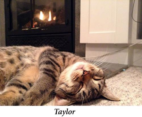 Taylor,+
