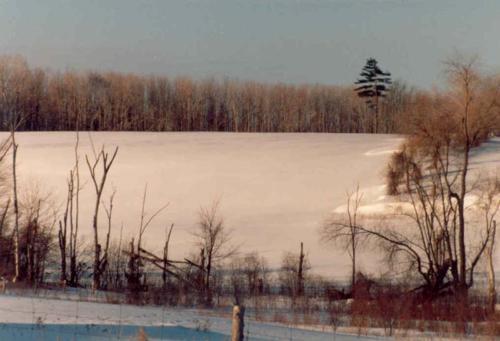 1987 36 Farm